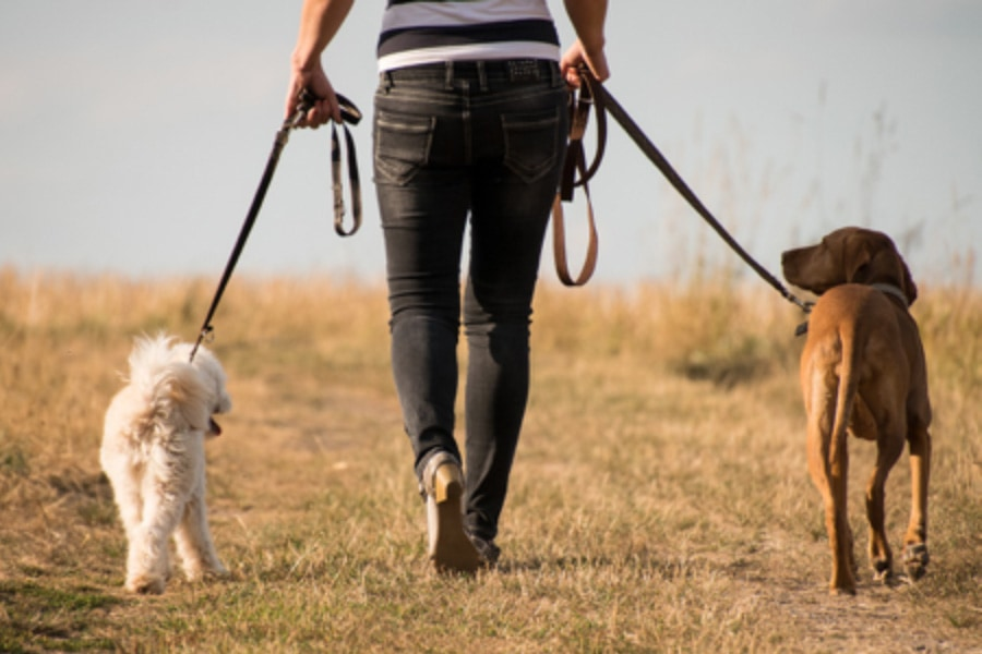 How to Stop Your Dog Pulling on the Leash