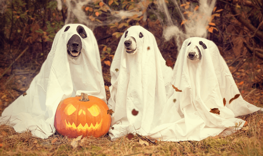Best Fall & Halloween Dog Events In Los Angeles!