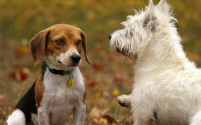 Dog Park Etiquette for Pets and Owners