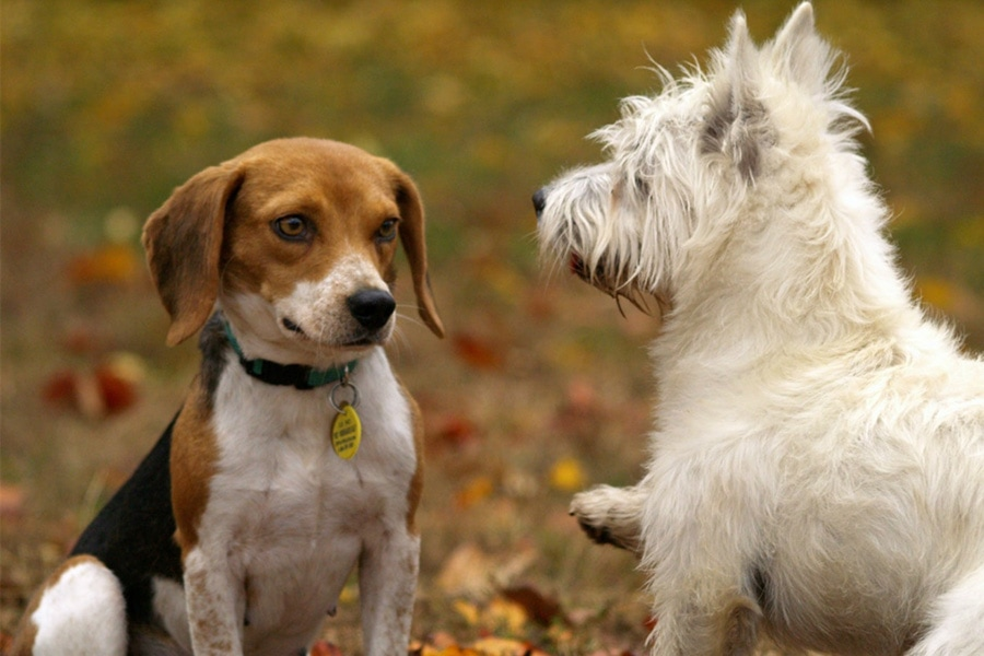 Dog Park Etiquette for Pets and Owners in Los Angeles