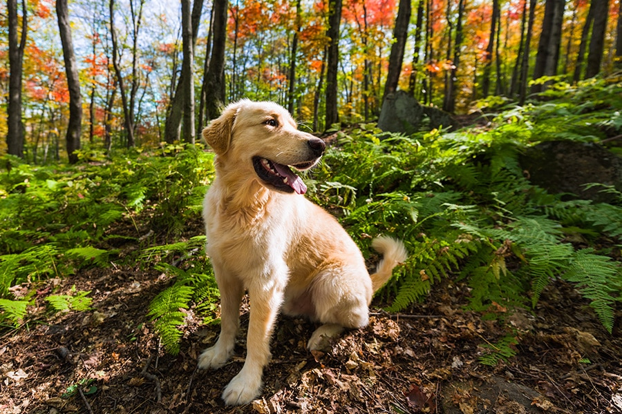Don't Let Your Pet Fall Victim to Fall Allergies