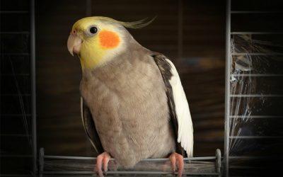 List of the Best Avian Vets in Los Angeles