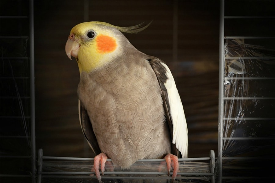 List of the Best Avian Vets in Los Angeles