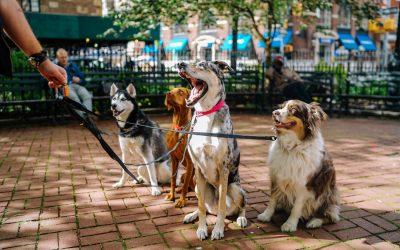 hiring a dog walker in Los Angeles petsitter