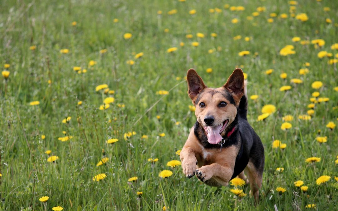 Spring Bucket List Ideas & Activities for Pet Owners