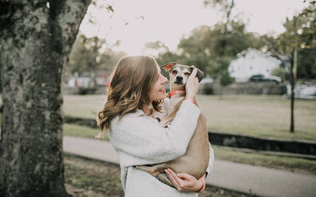 The Truth About CBD Oil for Pets