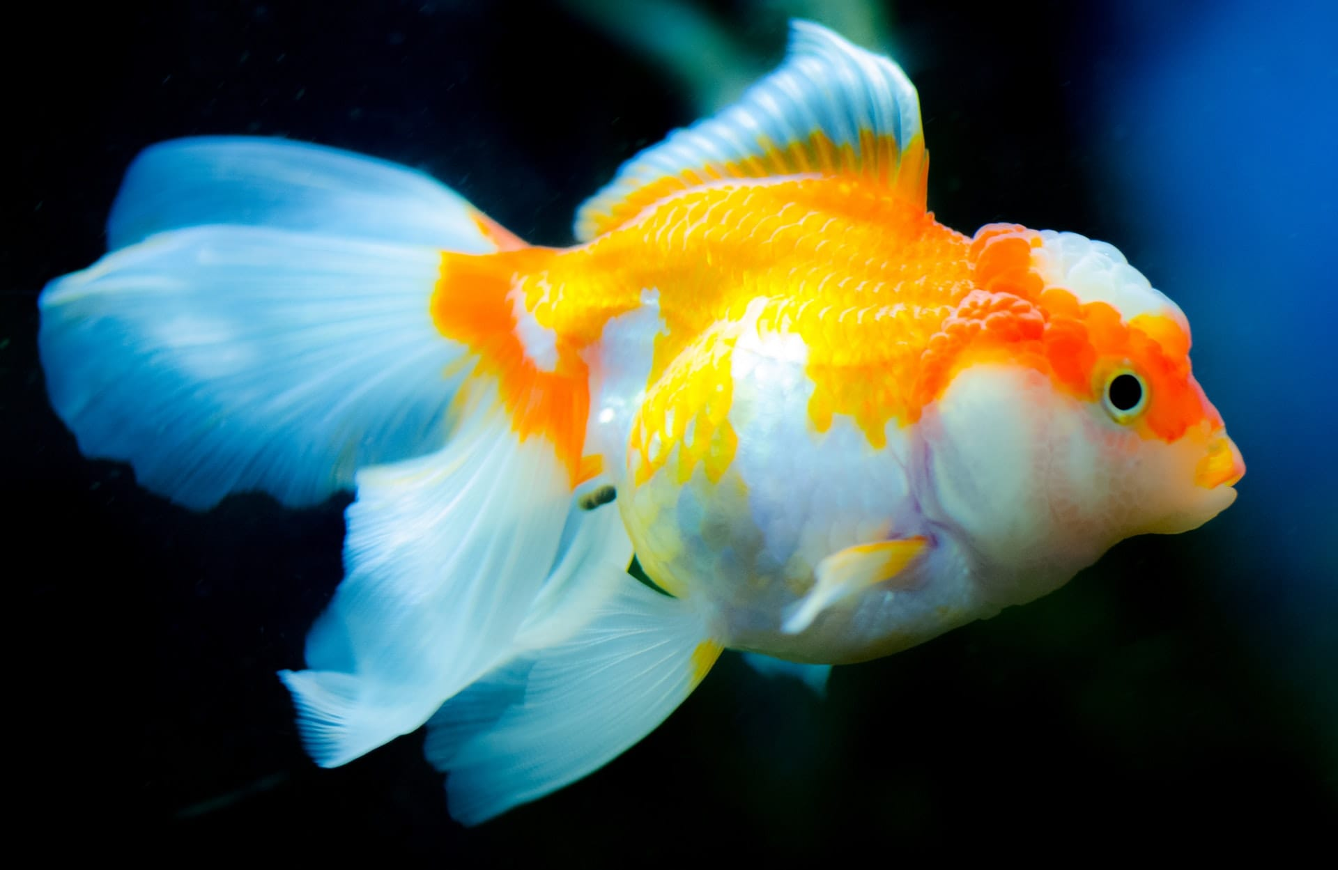 The Top 12 Pet Fish Species For Beginners Animal Magnetism La