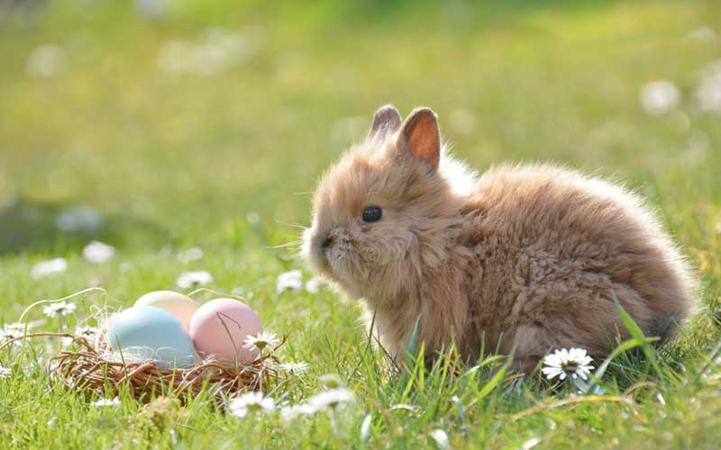 Baby Bunnies and Chicks are NOT Pets for Easter Gifts