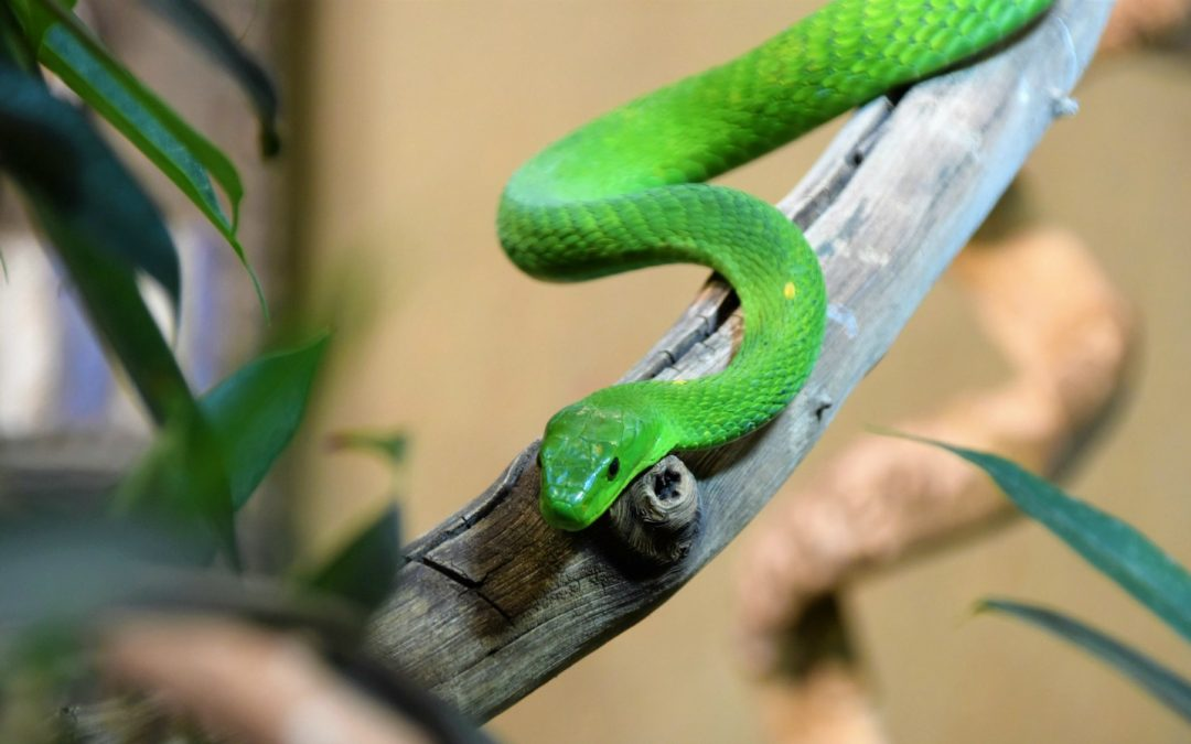 The Pros and Cons of Owning a Pet Snake