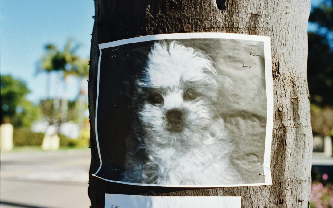 How to Find a Lost Pet in Los Angeles (and Prevention Tips!)