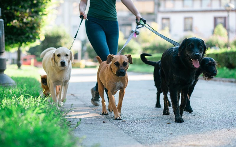 The Downside to Dog Walking Tech Companies