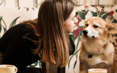 The Best Dog Friendly Restaurants in Marina Del Rey and Del Rey