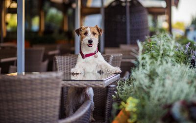 Top 11 Dog-Friendly Restaurants in Santa Monica