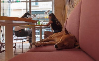 Top 8 Dog-Friendly Restaurants in Playa Vista