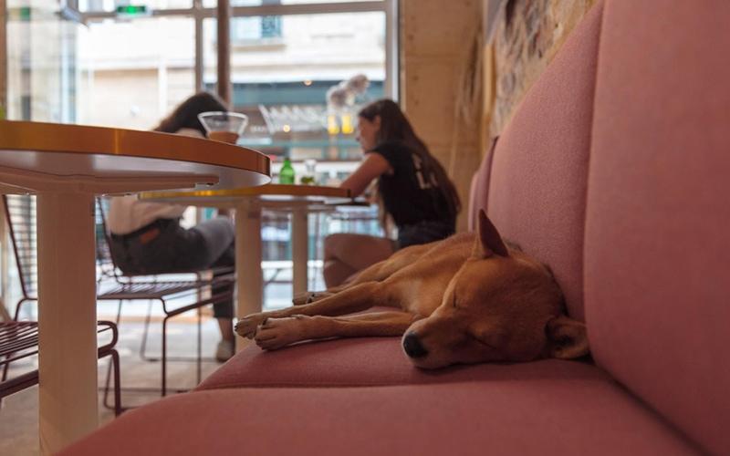 Top 8 Dog-Friendly Restaurants in Playa Vista