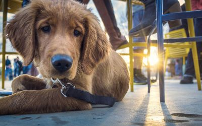 Westchester and Culver City Dog-Friendly Restaurants