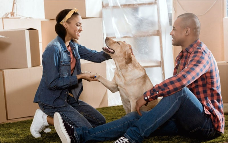 Moving with Your Dog – A Complete Guide to a Stress-Free Move