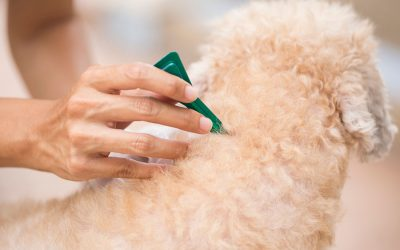 Your Essential Guide to Flea and Tick Prevention and Treatment