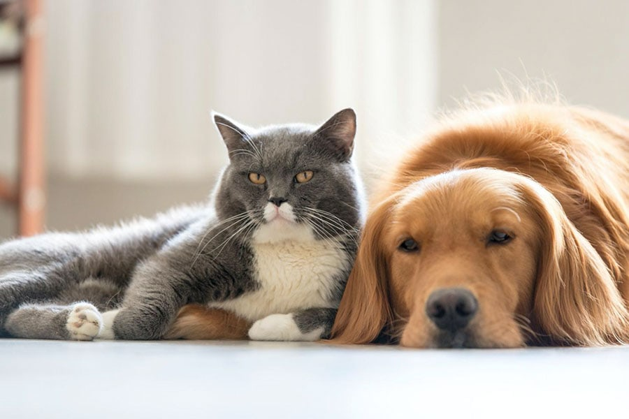The 411 on Pet Insurance in Los Angeles