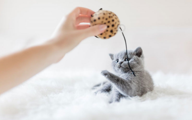 8 Best Toys Every Indoor Cat Needs to Stay Active
