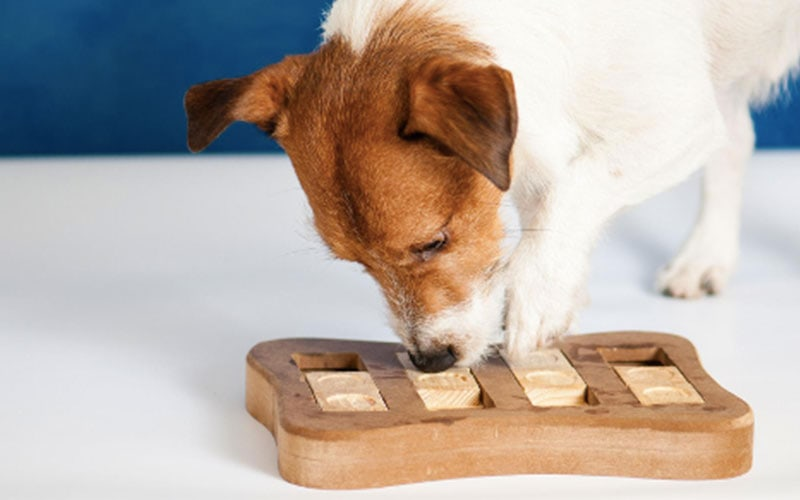 Indoor and Outdoor Canine Enrichment Activities and Games